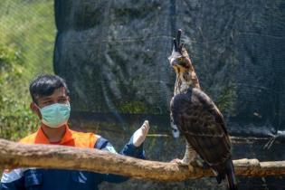 wilmar-group-lakukan-konservasi-burung-pemangsa-di-kalimantan