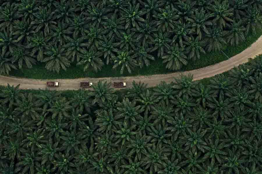 Indonesia Kembali Jadi Eksportir Terbesar Minyak Sawit Dunia