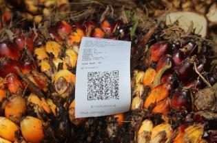transformasi-digital-perkebunan-kelapa-sawit-di-masa-pandemi
